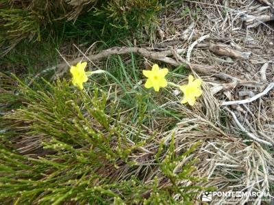 Cuerda Larga, Sierra de Guadarrama; excursion fin de semana; naturaleza viajes; viajes de 1 dia;cast